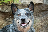 DOG 01 NR0068 01