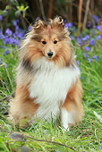 DOG 01 NR0071 01