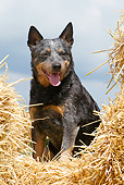 DOG 01 NR0078 01