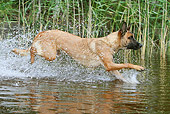 DOG 01 NR0079 01