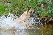 DOG 01 NR0080 01