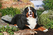 DOG 01 NR0088 01