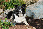 DOG 01 NR0089 01