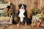 DOG 01 NR0091 01