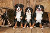 DOG 01 NR0094 01