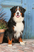 DOG 01 NR0098 01