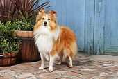 DOG 01 NR0100 01