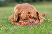 DOG 01 NR0105 01