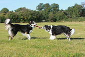 DOG 01 NR0107 01