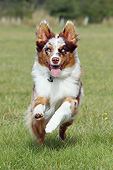 DOG 01 NR0113 01