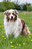 DOG 01 NR0118 01