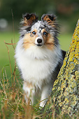 DOG 01 NR0126 01
