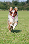 DOG 01 NR0131 01