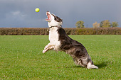 DOG 01 NR0132 01