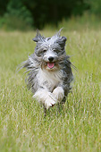 DOG 01 NR0134 01