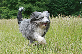 DOG 01 NR0135 01