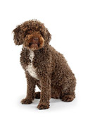 DOG 01 PE0007 01