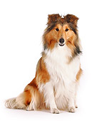 DOG 01 PE0009 01