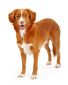 DOG 01 PE0011 01