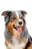 DOG 01 PE0018 01