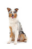 DOG 01 PE0019 01