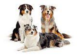 DOG 01 PE0022 01