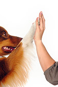 DOG 01 PE0026 01