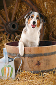 DOG 01 PE0030 01