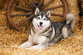 DOG 01 PE0035 01