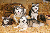 DOG 01 PE0038 01