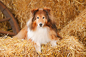 DOG 01 PE0040 01