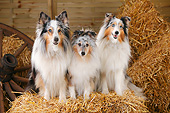 DOG 01 PE0042 01
