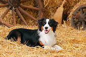 DOG 01 PE0046 01