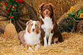 DOG 01 PE0047 01