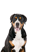 DOG 01 PE0055 01