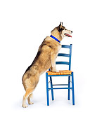 DOG 01 RK0013 01