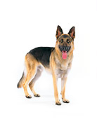 DOG 01 RK0035 05