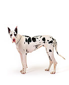 DOG 01 RK0078 03