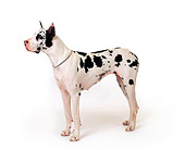 DOG 01 RK0078 22