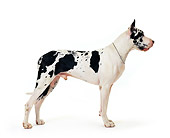 DOG 01 RK0078 24