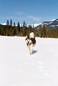 DOG 01 RK0102 06