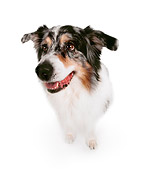 DOG 01 RK0177 04