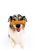 DOG 01 RK0178 04