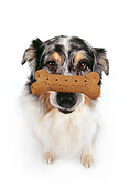 DOG 01 RK0178 07