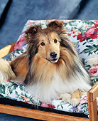 DOG 01 RK0208 03