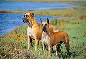 DOG 01 RK0260 01