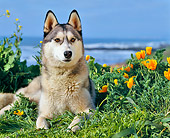 DOG 01 RK0290 01