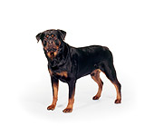 DOG 01 RK0316 11