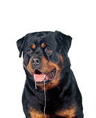 DOG 01 RK0322 03