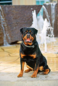 DOG 01 RK0354 01